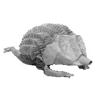 Hedgehog / Hérisson